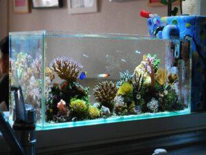 20 gallon long rimless aquarium