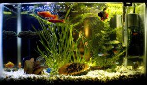 30 gallon long aquarium