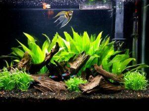 30 gallon long fish tank
