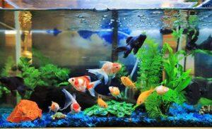 400 gallon aquarium