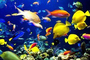 400 gallon fish tank dimensions