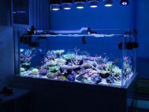 50 gallon lowboy aquarium