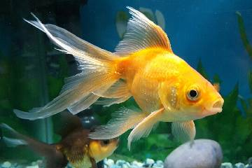 FISH TANK BOTTOM FEEDERS