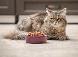 applaws dry cat food