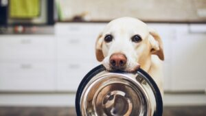 best salmon dog food