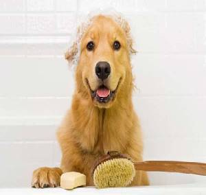 conditioner for golden retriever