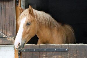 corner hay feeders for horses
