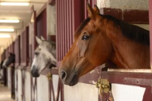 corner horse feeder