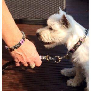 dog collar friendship bracelet