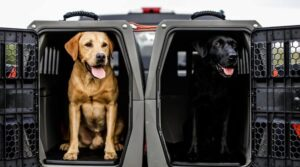 dog crate for truck