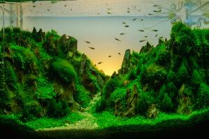floating freshwater aquarium plants