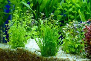 live floating aquarium plants