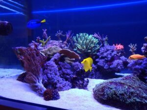 low boy aquarium