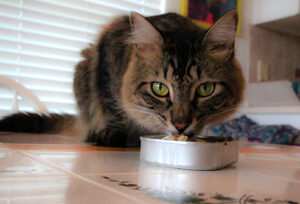 paws cat food