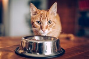 redford cat food