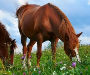 calming supplements for horses