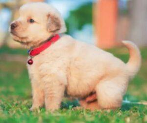 tuffy's gold dog food