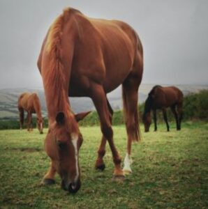 horse calming supplements that work