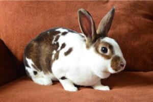 oxbow rabbit food