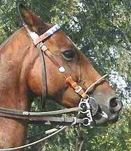 soft bits for horses