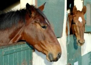 ulcer medication for horses