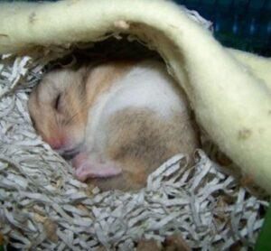 blanket for hamster