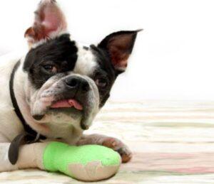 can you put liquid bandage on a dog