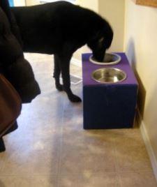 child proof dog bowl