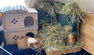 guinea pig fleece liners