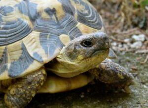 how long can red eared sliders stay out of water
