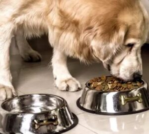 how to keep baby out of dog food