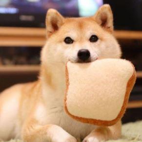 shiba inu dog food