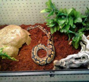 bedding for ball python