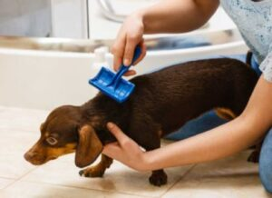 best dog brush for shedding