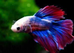 best fish tank for betta