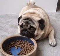 best food for small breed puppies