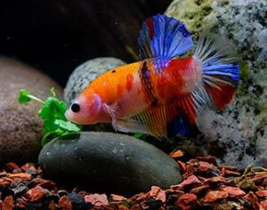 best substrate for freshwater aquarium