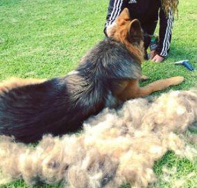 dog brush for shedding