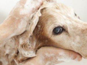 dog shampoo for dry skin