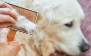dog shedding remedies