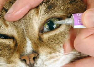 erythromycin ophthalmic ointment cats