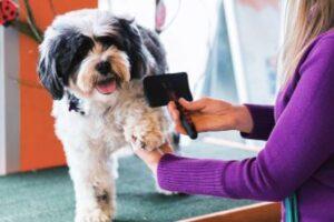 gabapentin side effects for dogs