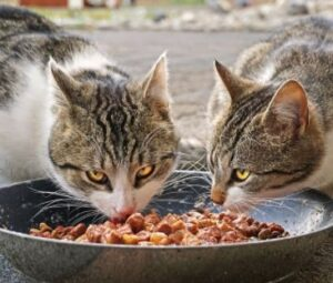good dry cat food