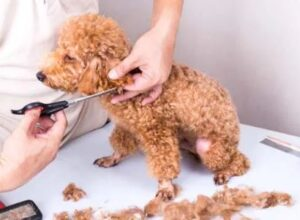 pet clippers for dogs