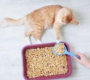 pine pellets cat litter