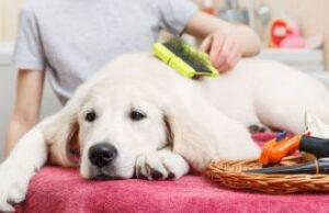 short hair dog brush