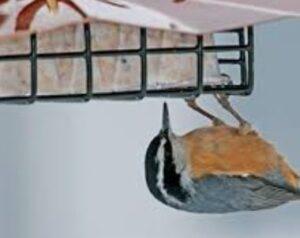 starling proof bird feeders