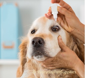 antibiotic eye drops for dogs