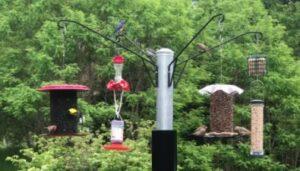 bird feeder on pole