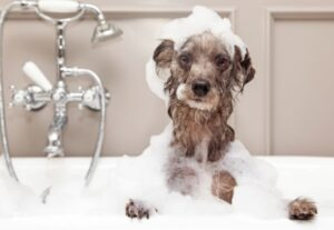 buddy wash shampoo